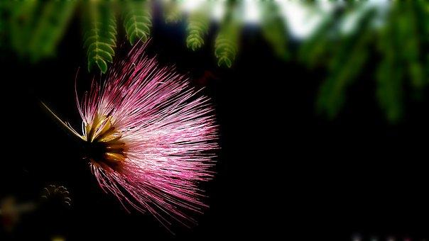 Spoor Flower, Nature's Smile, Wildflower, Jiri