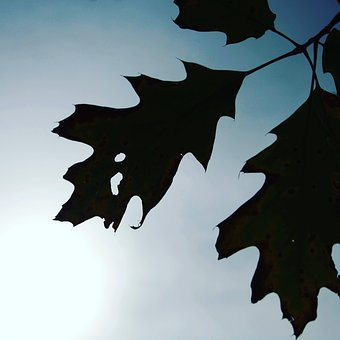 Leaf, Leaves, Autumn, Dried Leaves, Nature, Dry Leaf