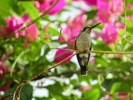 Bird, Hummingbirds, Nature, Birds, Environment