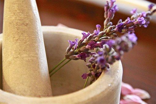 Herbal Tea, Pesto, Violet, Lavender, Flowers, Nature