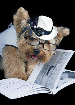 Pet, Reading, Sunglasses