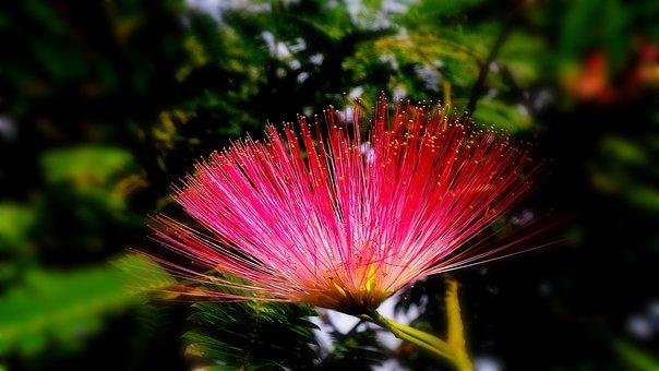 Spoor Flower, Wildflower, Nature's Smile
