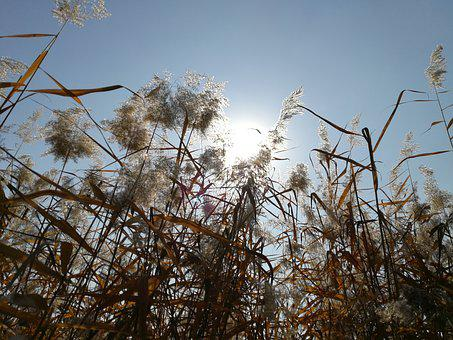 Autumn, Park Corner, Reed, Sunshine