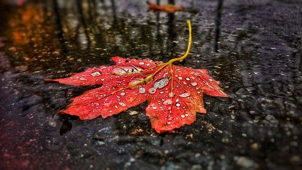 Leaf, Tree, Road, Water, Drip, Drop Of Water, Autumn
