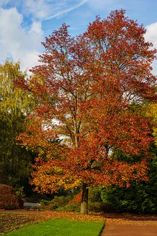 Mönchengladbach, Colorful Garden, Tree, Garden, Leaf