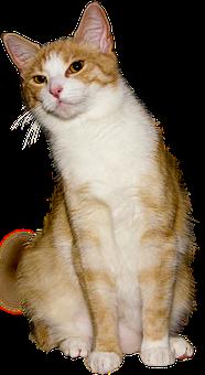 Cat, Isolated, View, Interesting, Cheekily