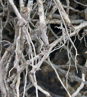 Roots, Tree Roots, Tree, Nature, Forest, Ecology