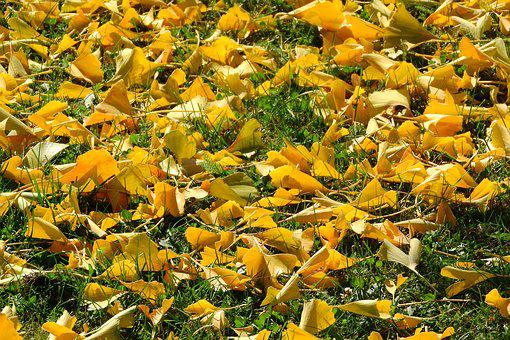 Fallen Leaves, Autumn Leaves, Autumn, Golden Autumn
