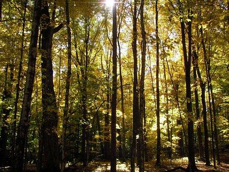 Fall, Forest, Sunlight, Woods, Autumn, Daylight Savings