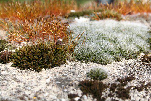 Moss, Plant, Fouling, Lichen, Nature Recording, Green