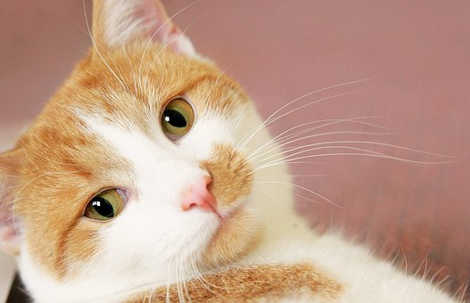 Cat, Red, Mackerel, Animal, Fur, Red Cat, Pet