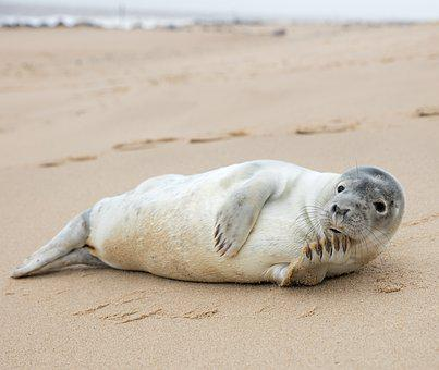 Pose, Seal, Norfolk