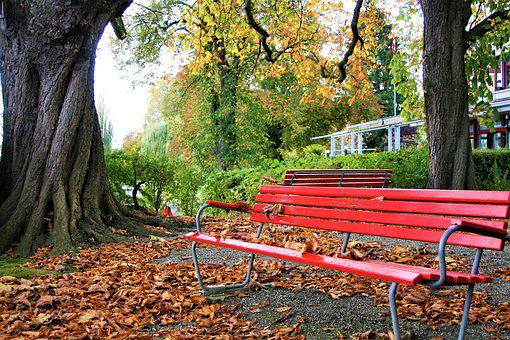 The Old Tree, Benches, Square, Fresh Air