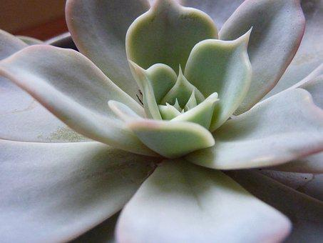 Succulent, Plant, Thick Sheet Greenhouse