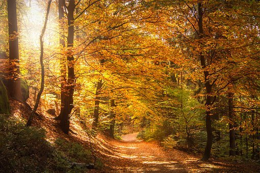 Forest, Light Beam, Sun, Sunbeam, Light, Morgenstimmung
