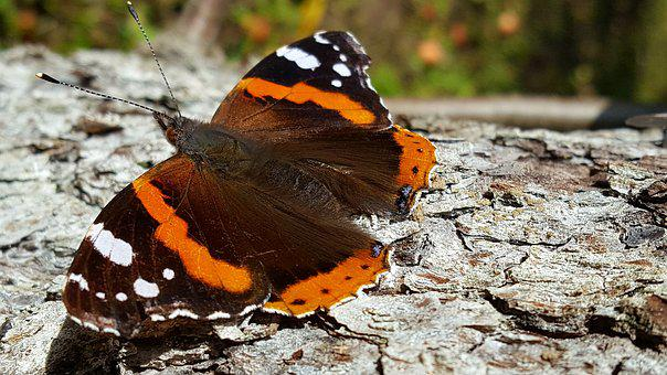 Butterfly, Autumn, Bark, Tree, Nature, Animal, Insects