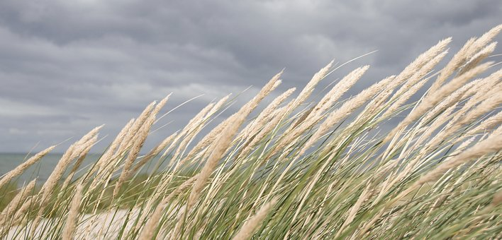 Nordfyn, Beach, Summer, Uve, Holiday, Danish Beach