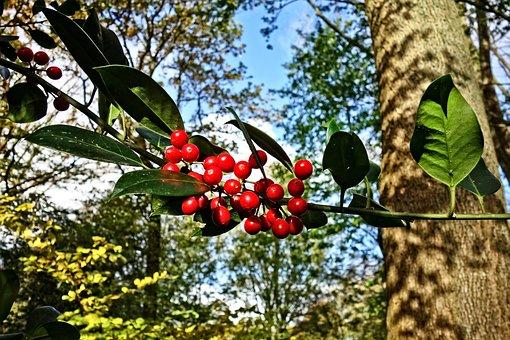 Red Berries, Berry, Branch, Leaf, Tree, Fruit