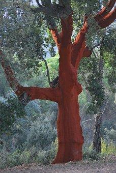 Cork Oak, Red, Bark, Cork