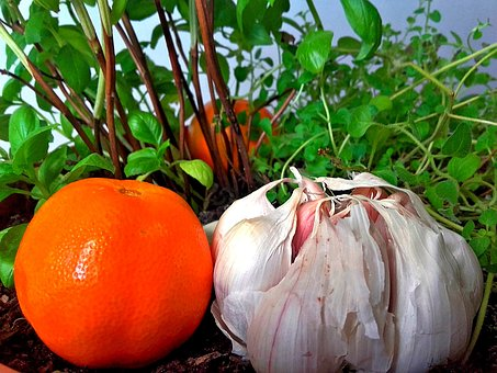 Herbs, Basil, Oregano, Flower Pot, Mandarin, Garlic