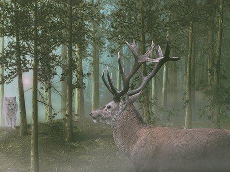 Hirsch, Wolf, Forest, Mood, Encounter, Nature, Mystical