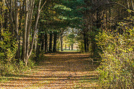 Fall, Woods, Autumn, Forest, Landscape, Nature, Yellow