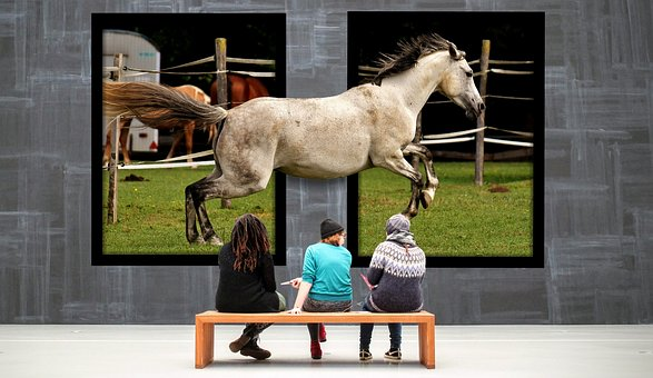 Gallery, Horse, Galloping, Exhibition, Images, Art