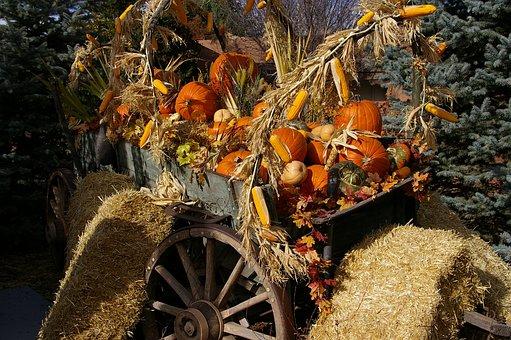 Halloween, Santa Fe, Pumpkins, Orange, Autumn