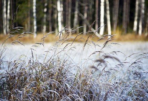 Hay, Autumn, Nature, Swamp, Atmosphere, Landscape Photo