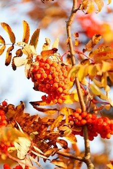 Autumn, Leaves, Leaf, Fall Foliage, Golden Autumn
