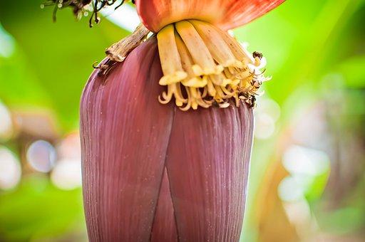 Banana, Fruit, Bee, Plant, Wimp, Flower, Macro