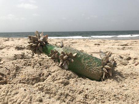 Beach, Sea, Message In A Bottle, Mussels, Flotsam