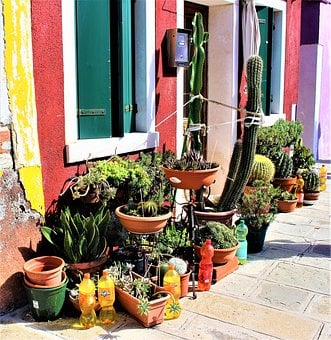 Cactus, Pots, Plants, Potted Plant, Pot, Flowers