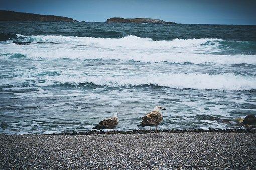 Nature, Birds, Black Sea, Coast, Sea, Seagull, Seagulls