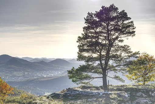 Tree, Vision, Sky, Hdr, Landscape, Outlook, Mountains