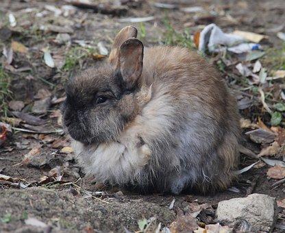 Autumn, Rabbit, Animals, Sulfur Rabbit, Animal, Pet