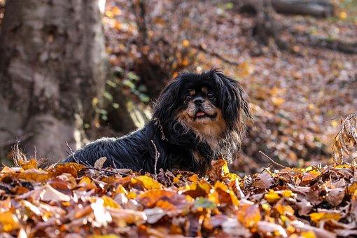 Dog, Autumn Still Life, Autumn Mood, Dog Britt