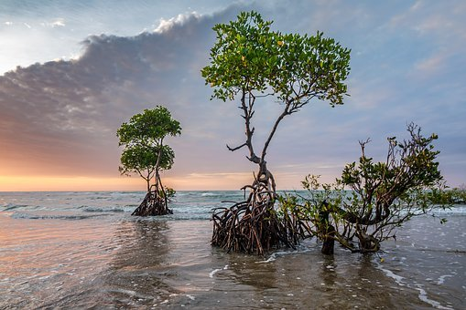 Sunset, Beach, Tropical, Mangrove Tree, Beach Sunset
