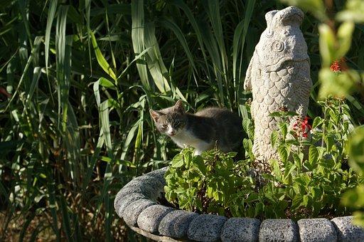 Cat, Hidden, Fish Statue