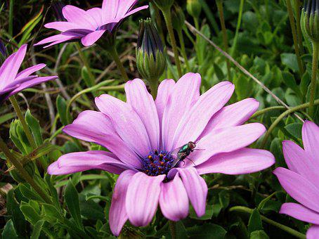 Flower, Fly, Sunny