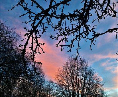 Himmel, Sunset, Twilight, Branches, Tree, Evening