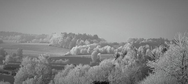Winter, Snow, Cold, Icy, Hoarfrost, Bitter Cold, Freeze