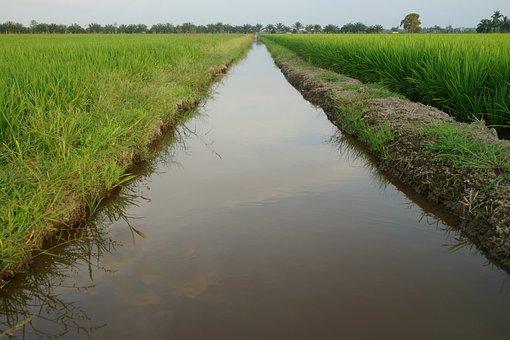 Water Ways, Irrigation, Padi Fields, Rice Production