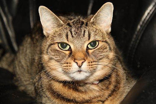 Cat, Best Friend, Køge, Denmark