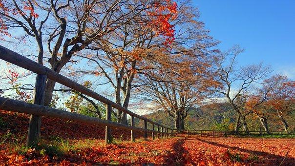 Japan, Autumn, Autumnal Leaves, Fall Of Japan, Natural