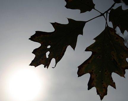 Leaf, Leaves, Autumn, Plant, Dried Leaves, Nature