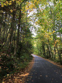 Road, Path, Forest, Autumn, Journey, Tree, Nature