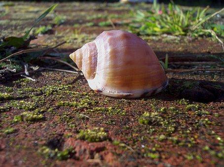 Shell, Close-up, Mollusk