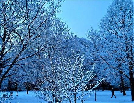 Winter, Snow, Tree, Landscapes, Snow Landscape