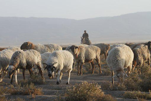 In Xinjiang, The Flock, Transitions